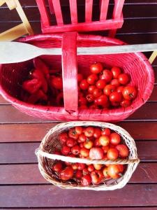 İşte fenomen domatesler !