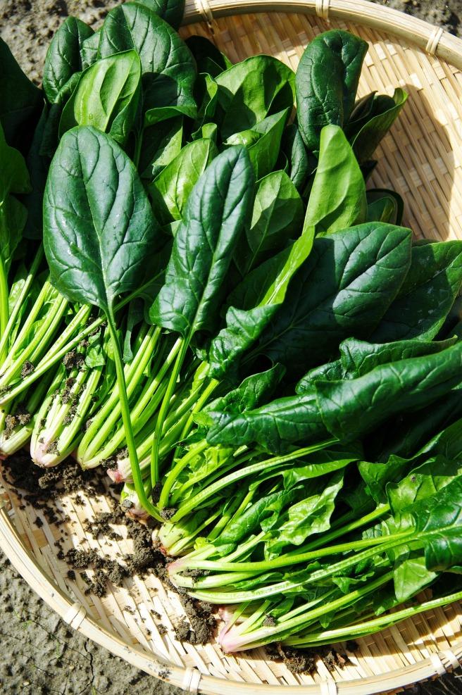 vegetables-1125420_1920.jpg