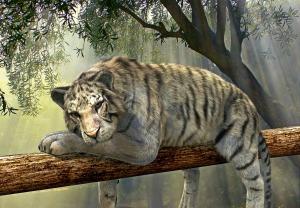 tiger-1098607_1920