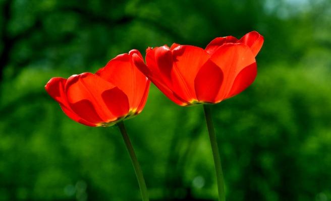 spring-739215_1920.jpg
